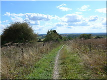 SU6022 : South Downs Way, Winchester to Exton (167) by Basher Eyre