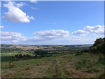SU6022 : South Downs Way, Winchester to Exton (171) by Basher Eyre