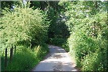 TQ4444 : Roman Road by N Chadwick