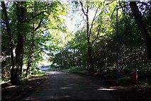 NJ6201 : Monboddo Road through Torphins Wood by Stanley Howe