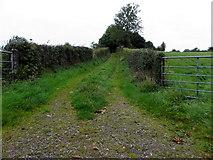 H6355 : A grassy lane, Tullywinny by Kenneth  Allen