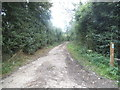 TL1402 : Track off Smug Oak Lane, Colney Street by David Howard