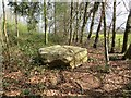 SO7589 : Granite erratic, Dudmaston by Richard Webb