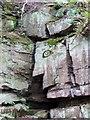 SE4006 : Rock face #4 by Steve  Fareham