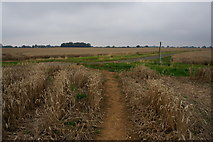 TA2904 : Crossroad of paths south of New Waltham by Ian S