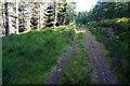 NN8267 : Forestry track, Glen Banvie Wood by jeff collins