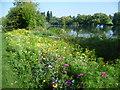 TQ4774 : Wildflower meadow in Danson Park by Marathon