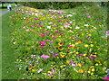 TQ4774 : Display of cornfield annuals in Danson Park by Marathon