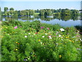 TQ4774 : Cornfield annuals by Danson Park lake by Marathon