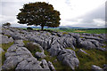 SD5579 : Limestone pavement, Newbiggin Crags by Ian Taylor