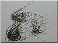 NR2062 : Seaweed art by Oliver Dixon