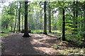 SJ5510 : Tobruck Plantation, Attingham Park by Jeff Buck