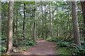 SJ5510 : New Plantation, Attingham Park by Jeff Buck