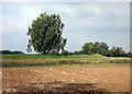 SU3796 : Rampart at Cherbury by Des Blenkinsopp