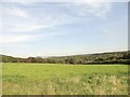 NZ3053 : View across the woods at Chartershaugh by Robert Graham