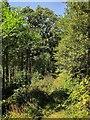 SX3059 : Path in Seaton valley by Derek Harper