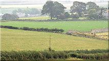J4772 : Autumn fields, Scrabo, Newtownards - September 2014(2) by Albert Bridge