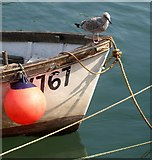 SX2553 : Boat and gull, West Looe by Derek Harper