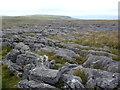SD7673 : Limestone pavement near Juniper Gulf by John H Darch