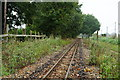 TG2920 : Bure Valley Railway by Peter Trimming
