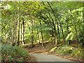 SP8907 : Hale Lane in Hale Wood by Robin Webster