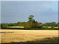 SP9006 : Stubble field near St. Leonards by Robin Webster