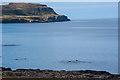 NM3549 : School of Dolphins leaving Calgary Bay by Tom Richardson