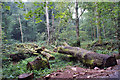 SX8862 : Fallen tree in Ten Acre Brake by Richard Dorrell