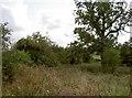 SP1721 : Along the ramparts by Neil Owen