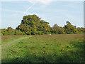 TQ0852 : The Meadow, Sheepleas by Alan Hunt