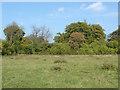 TQ0852 : The Sheepleas meadows by Alan Hunt