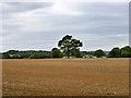 SU7448 : Field by Wood Hill Lane by Robin Webster