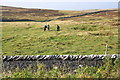 NY7405 : Horses on moorland under Rasett Hill by Roger Templeman
