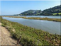 SY2591 : Axmouth Marsh, Devon by Christine Matthews