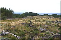 NM9210 : Cleared forestry by Patrick Mackie