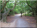 TQ5887 : Path through Woodland, Cranham Brickfields Nature Reserve by Roger Jones