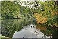NZ6519 : Castle Pond by Mick Garratt
