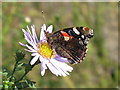 NT2470 : Red Admiral - underwing pattern by M J Richardson