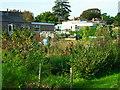 TL4675 : Chewell Lane allotments, Haddenham by Andrea