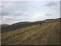 NY5600 : The track towards Mabbin Crag by Karl and Ali