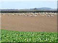 SO7597 : Crop field north of Worfield, Shropshire by Roger  Kidd