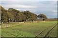 NZ0945 : Field east of A68 by Trevor Littlewood