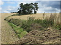SU3461 : Copse on Ham Hill, Wiltshire by Peter S