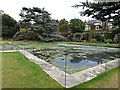 SH7972 : Lily pond cordoned off by Richard Hoare