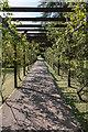 SY0785 : Arbour, Bicton Park Botanical Garden, Devon by Christine Matthews