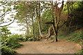 SH5836 : U tree by Richard Croft