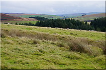 SD9433 : Sheep grazing land below Greave Pasture by Bill Boaden