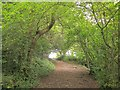ST5578 : Path near Blaise Castle by Derek Harper