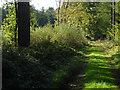 TQ0549 : Woodland ride, Clandon Downs by Alan Hunt