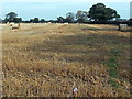 SJ5229 : Early October in rural north Shropshire by Jaggery